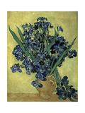 Van Gogh  Irises(1890)