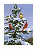 Songbirds on a Limb