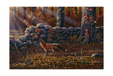 Autumn Reds - Red Fox