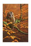 Autumn Tawny Owl