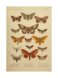 American Lepidoptera  Plate 3
