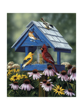 Birdhouse  Birds  Coneflower