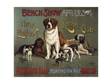 Bench Show  New England Kennel Club