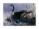 1992 Canada Goose