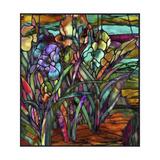 Candy Coated Irises