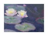 Crop Water Lilies