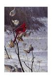 Cardinal and Milkweed