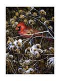 Cardinal and Thistles