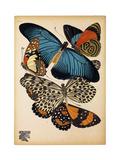 Butterflies Plate 2