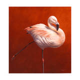 Flame Bird Flamingo
