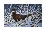 Fresh Snow - Ringneck Pheasant