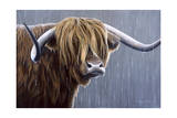 Highland Bull Rainy Day