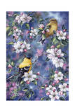 Gold Finch and Blossoms