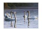 Hanover Swans Five