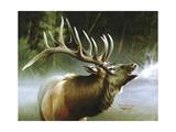 Elk in Mist