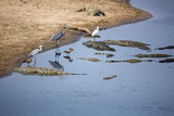 Waterbirds and Crocodiles  South Africa