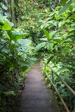 Tropical Gardens with Trail Leading through the Fresh Green Leaves