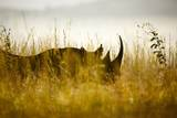 Black Rhino; South Africa