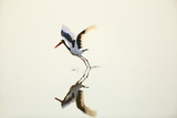 Saddlebilled Stork  South Africa