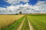 Wheat Field and Cumulonimbus Clouds
