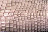 Crocodylus Porosus (Saltwater Crocodile) - Scales