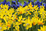 Itzim Narcissus