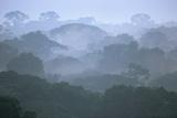 Tropical Rainforest Canopy in Morning Fog