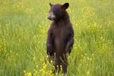 Black Bear Surveying Area