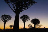 Silhouettes of Trees at Dusk