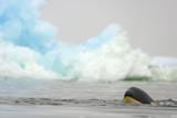 Killer Whale Swimming near Iceberg
