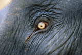 Close-Up View of Elephant's Eye