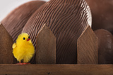 Toy Chick on Fence with Chocolate Eggs
