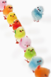 Fluffy Toy Chicks in a Row
