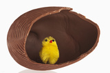 Toy Chick inside Hollow Chocolate Egg