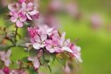 Close-Up View of Spring Blossom