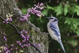 Bird on Tree  Close-Up