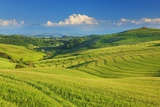 Tuscany Landscape with Corn Fields