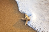 Starfish with Evening Surf Rolling In