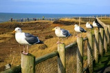 Seagulls at Boiler Bay  Oregon  USA