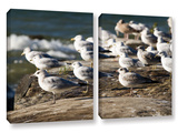 Pigeons  2 Piece Gallery-Wrapped Canvas Set
