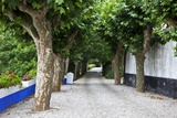 Tree Lined Walkway around the Village of Obidos