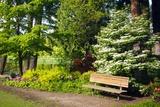 Spring in Crystal Springs Rhododendron Garden  Portland  Oregon  USA