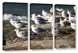 Pigeons  3 Piece Gallery-Wrapped Canvas Set