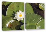 Lily Pad  2 Piece Gallery-Wrapped Canvas Set