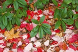Close-Up of Autumn Leaves on Ground