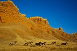 Herd of Horses Running along the Red Rock Hills of the Big Horn Mountains