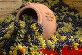Vineyards near Monte Falco