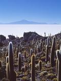 Salar De Uyuni and Cactuses in Isla De Pescado  Bolivia