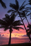 Palm Trees at Sunset on Keawekapu Beach  Wailea  Maui  Hawaii