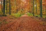 Hiking Trail through Beech Forest in Autumn